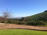 Tokara vineyard wins most beautiful stop of the four we went to