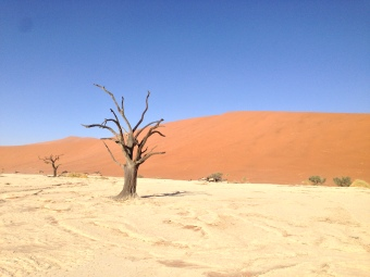 Tree at Deadvlei
