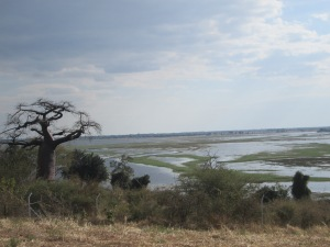 Baobob tree and river at the Batswana/Namibia border