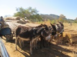 Road block in Matobo National Park