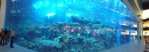 Panorama of the aquarium tank at the Dubai mall