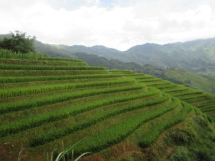 Rice terraces as seen along hiking trail