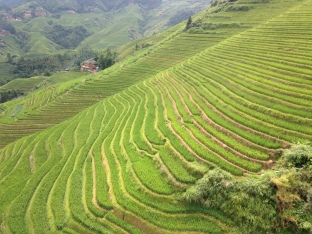 Good shot of the rice terraces along the mountain side