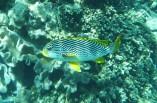 Zebra fish!