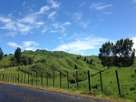 View along The Lost World Highway - gorgeous drive from Tongariro to Taranaki