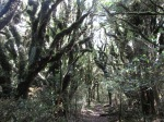 Cool trees along a walk in Taranaki/Egmont National Park