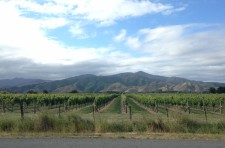 Vines and hills of Marlborough Wine Country