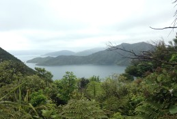 View from a lookout at the top of a pass along the Queen Charlotte Track
