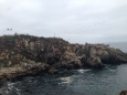 Rock outcroppings along the bike lane in Vina del Mar with ocean birds and seals galore