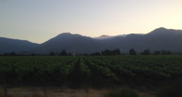 The Casablanca wine valley between Valpo and Santiago at sunset, seen from our bus ride