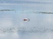Flamingos n El Calafate