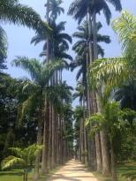 Botanic gardens in RIo